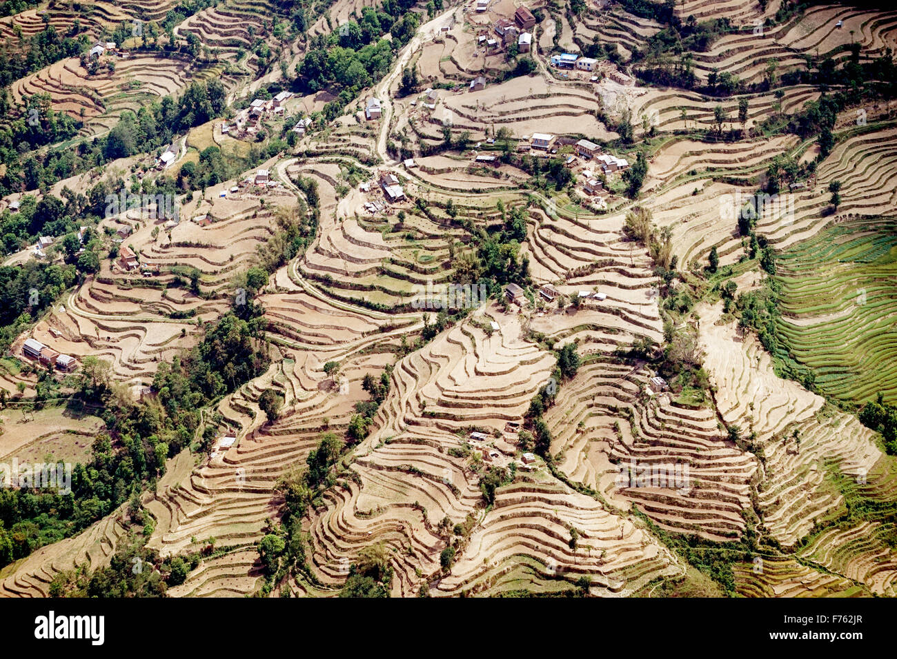 Terraced cultivation, kathmandu, nepal, asia - Stock Image