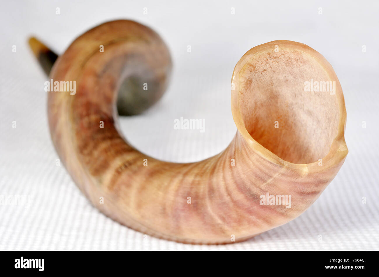 Selective Focus Of Shofar Horn From The Horn Of A Greater Kudu On