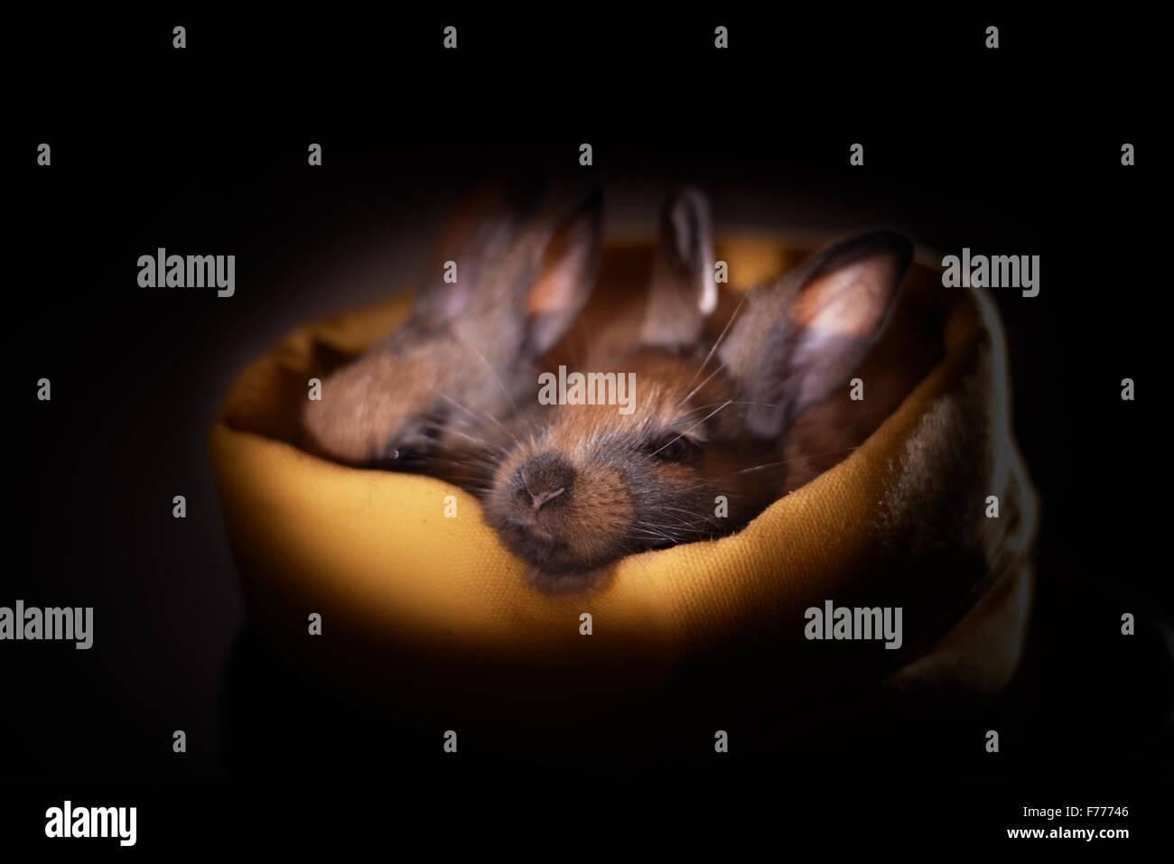 cute little bunnies - Stock Image