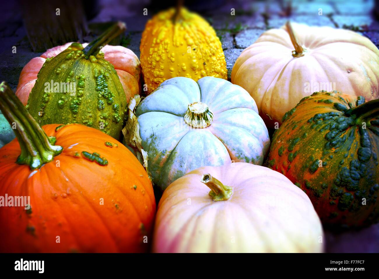 Pumpkins! Pile of vibrantly colored pumpkins ready for the picking! - Stock Image