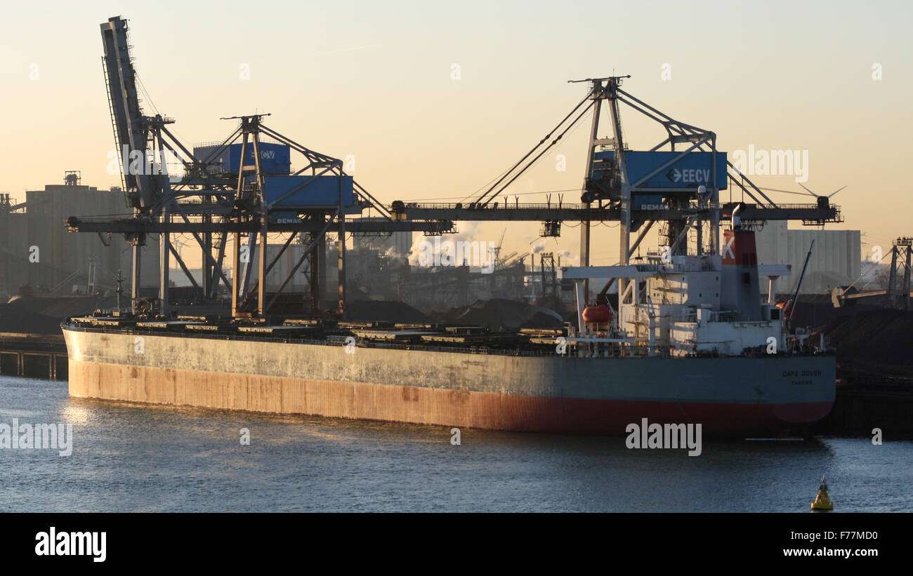 North Sea, Cape Dover bulk carrier in Rotterdam harbour at sunrise with shipping, bulk containers tugs - Stock Image
