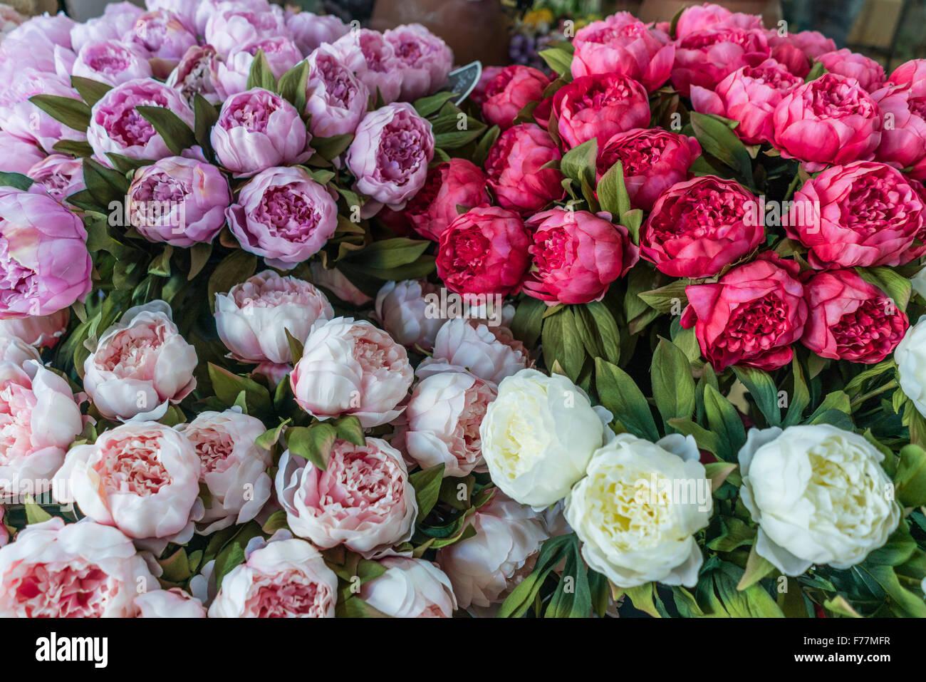 Paeonia delavayi, peony, Flowers , Flower Market, Nice, Alpes Maritimes, Provence, French Riviera, Mediterranean, - Stock Image