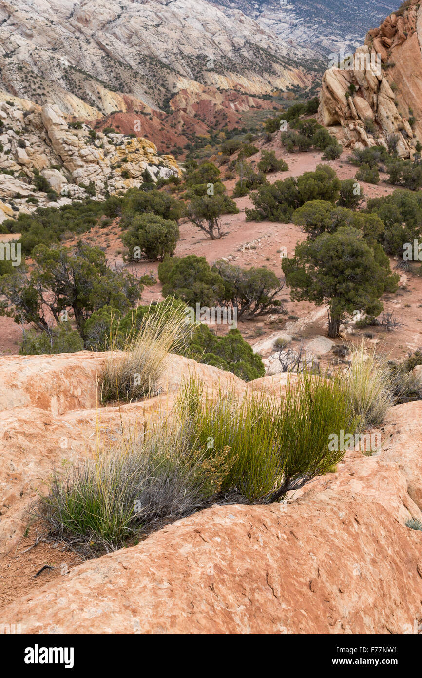 Sedimentary rocks pushed out of the earth's crust, Dinosaur National Monument, Utah - Stock Image
