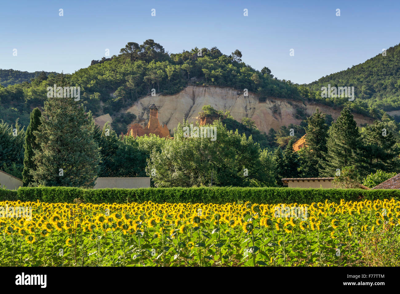Rustel Colorado, sunflowers,  ochre, Luberon, Provence, France, - Stock Image