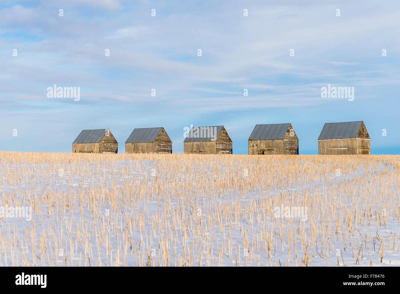 Row of barns in winter, Kneehill County, Alberta, Canada - Stock Image