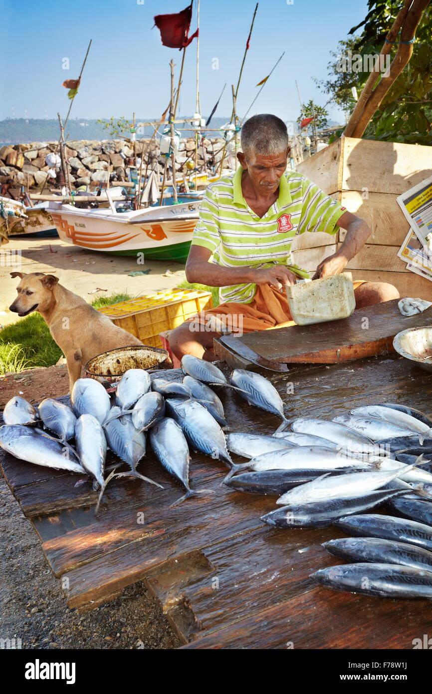 Sri Lanka - Galle, fishermen selling fresh fish in the port - Stock Image