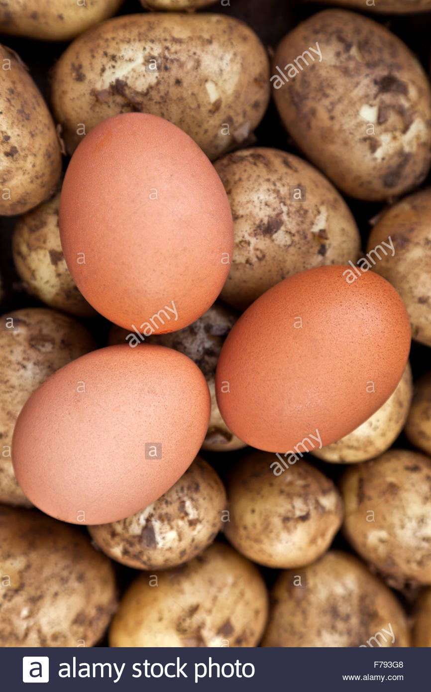 Two eggs in unbroken shells on top of some uncooked new potatoes. The ingredients for eggs and chips (UK) or fries - Stock Image