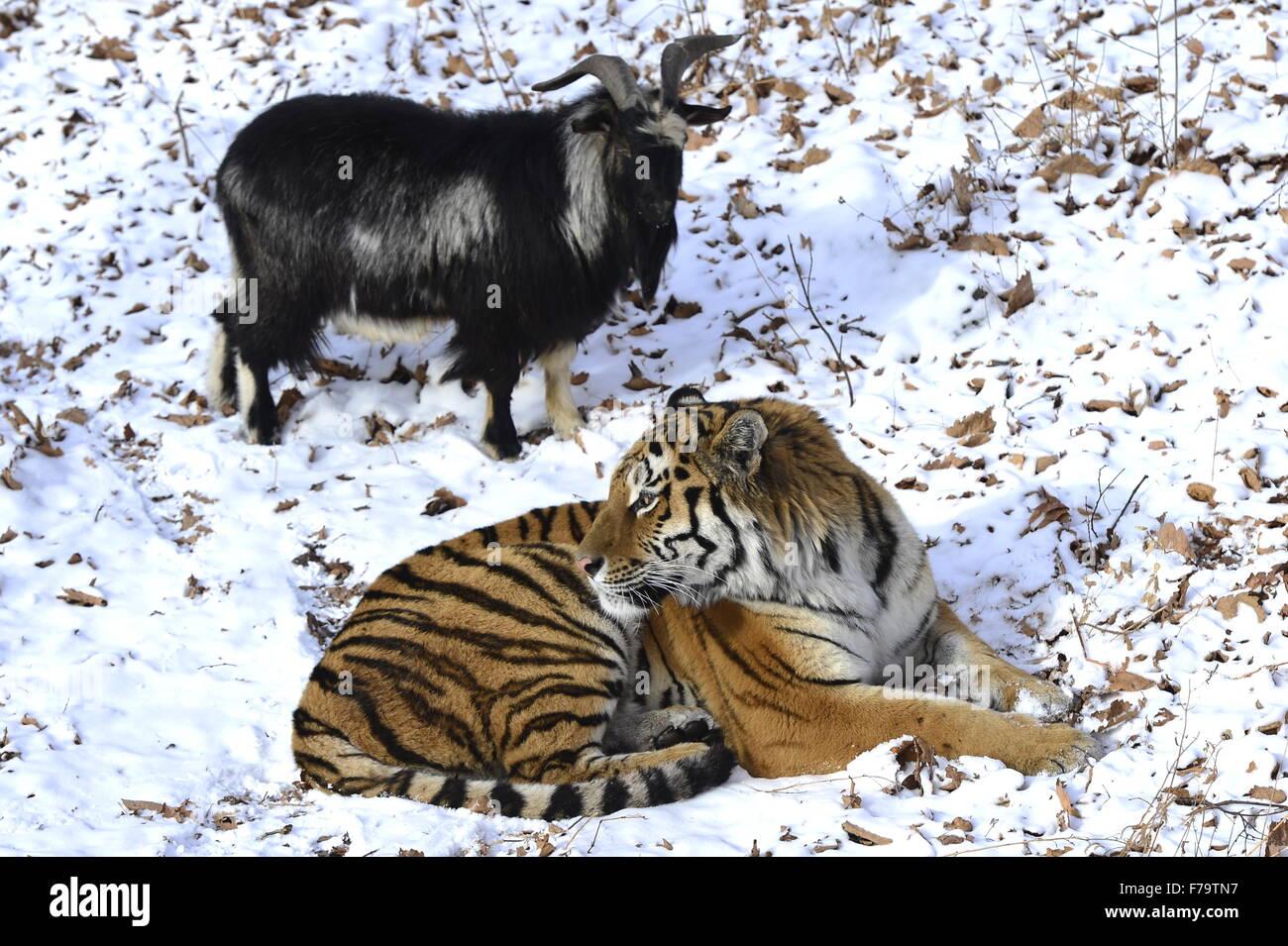 Safari Park in Shkotovo: a corner of unity with nature 9