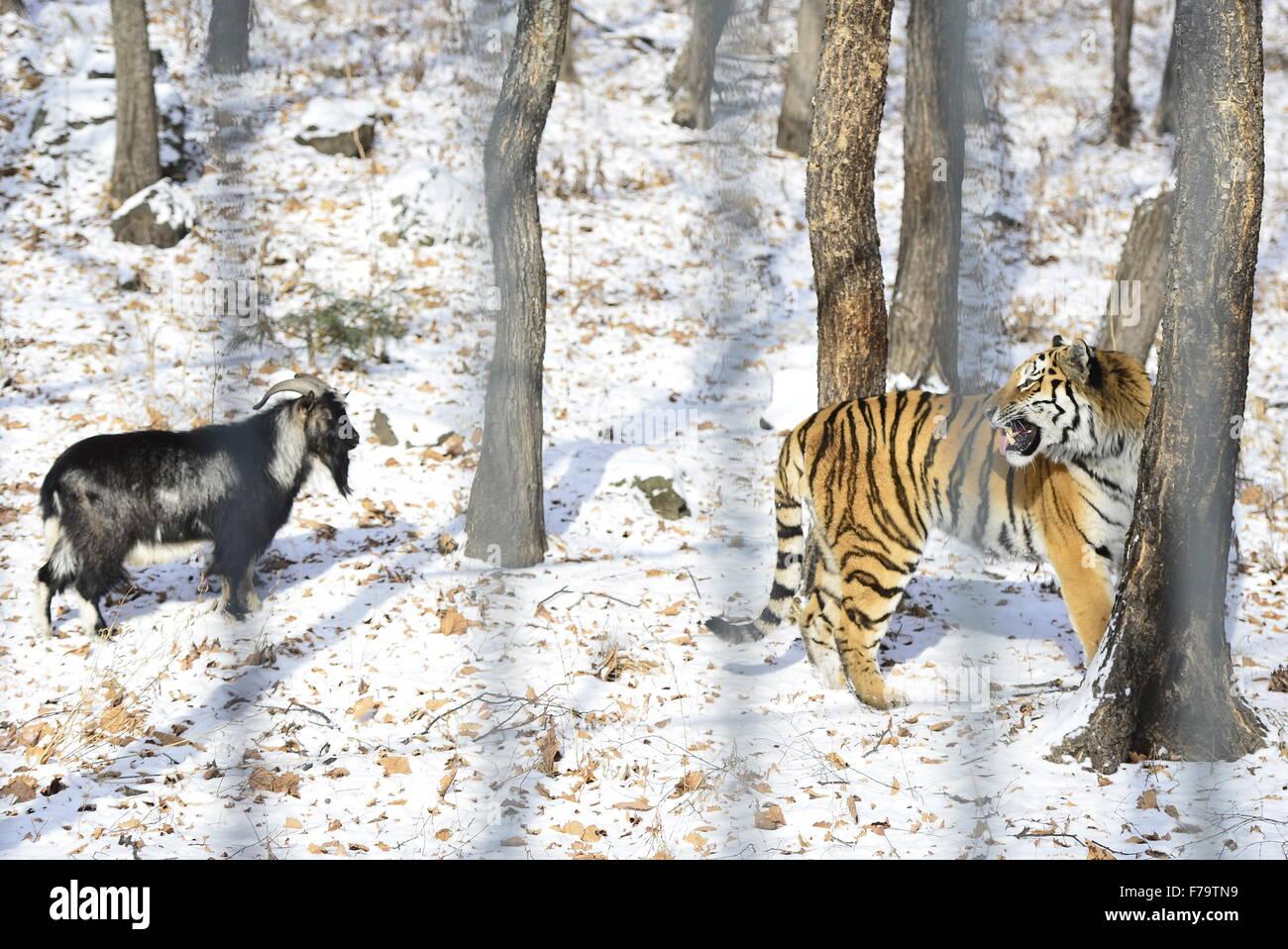 Safari Park in Shkotovo: a corner of unity with nature 36