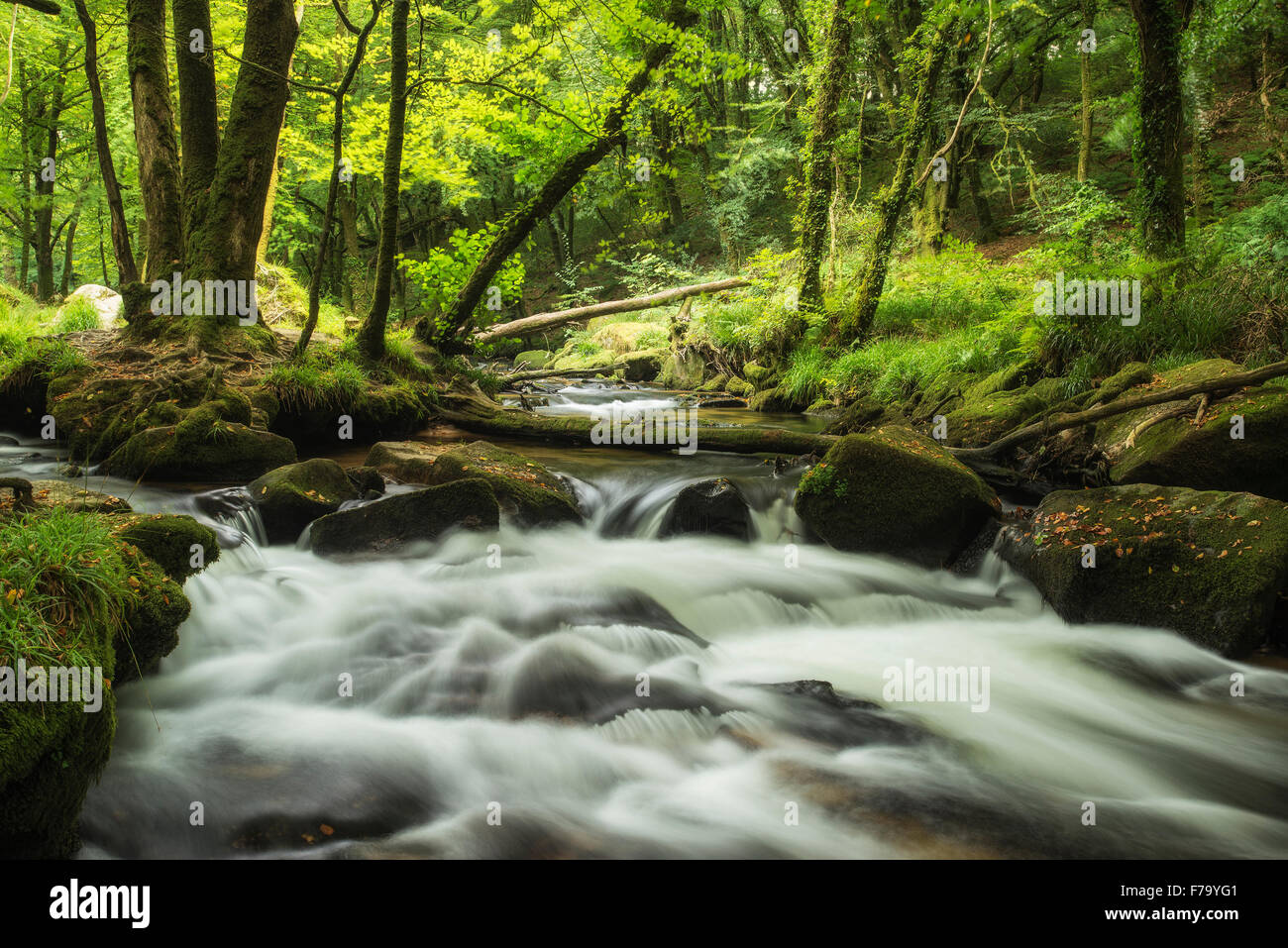 Landscape iamge of river flowing through lush green forest in Summer - Stock Image