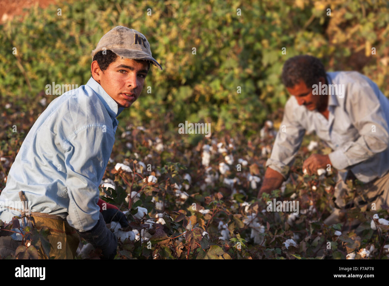 Child workers work in very difficult conditions,They can not go to school to work in the cotton fields.Harran plain Stock Photo