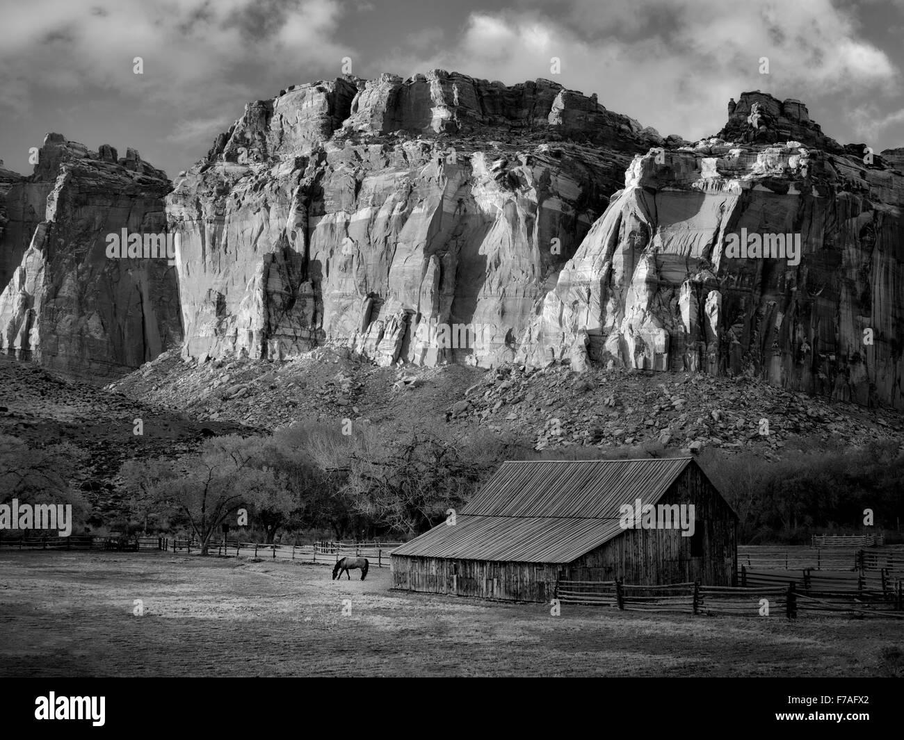 Gifford farm barn and horse. Fruita, Capitol Reef National Park, Utah - Stock Image