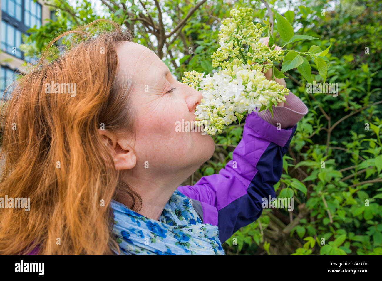 Woman smelling white lilac flowers - Stock Image