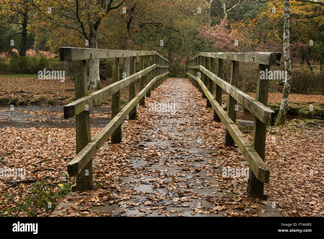 Footbridge over Ober Water Rhinefield Walk The New Forest Hampshire England UK Stock Photo