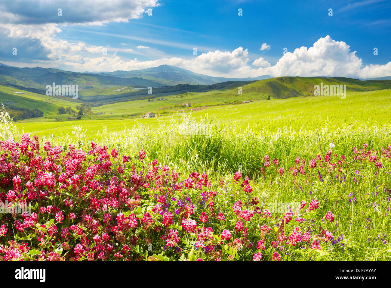 Sicily spring meadow landscape with flowers, Sicily Island, Italy - Stock Image