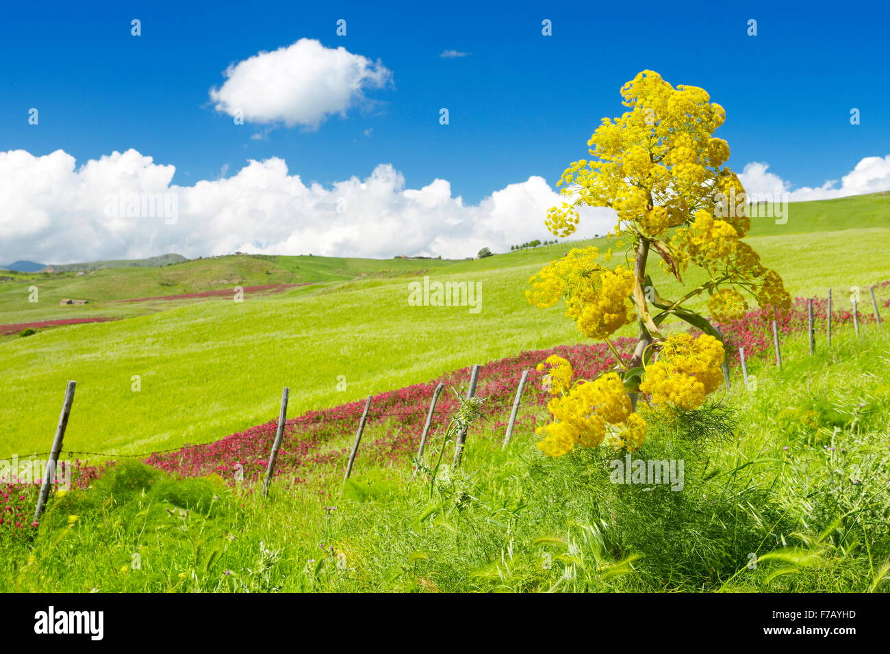 Sicily spring meadow landscape, Central Sicily, Italy - Stock Image
