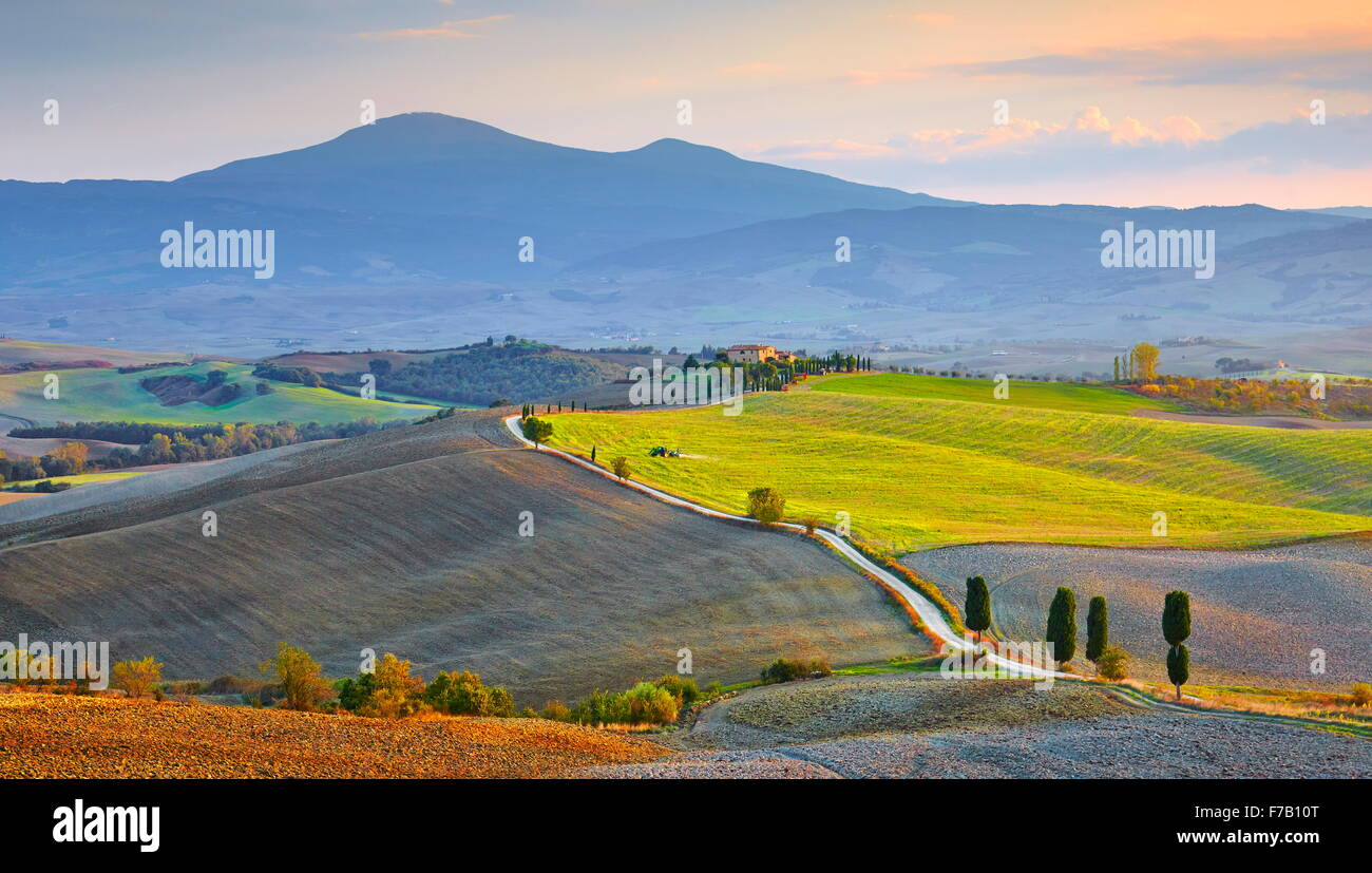 Cypress trees landscape, Val d'Orcia, Tuscany, Italy - Stock Image