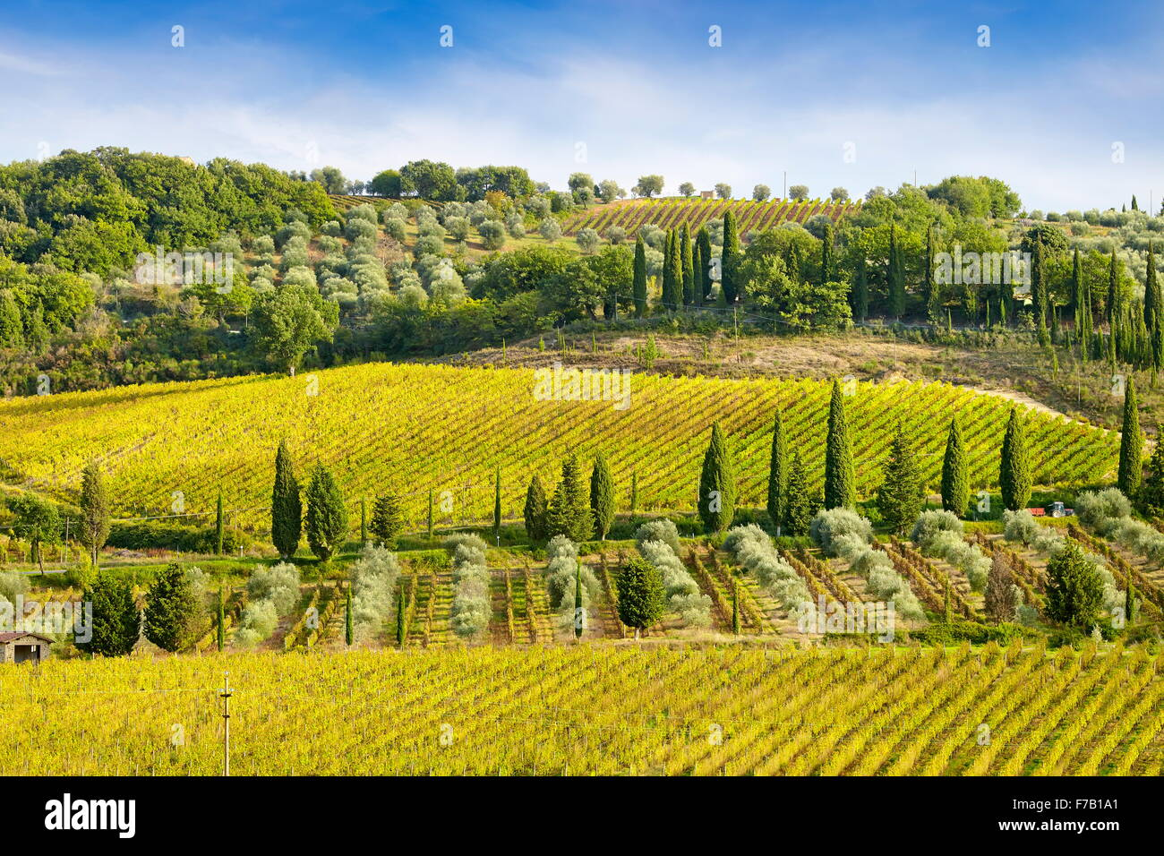 Wineyard, Tuscany Italy - Stock Image