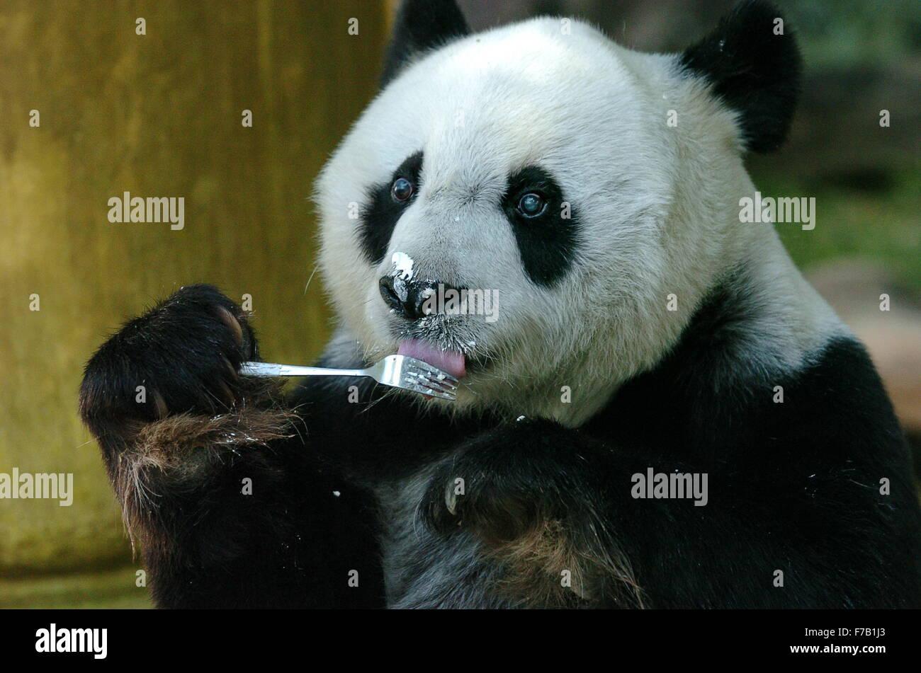 Fuzhou, China. 28th November, 2015. File photo taken on Dec. 18, 2005 shows giant panda Basi eating a cake at the Stock Photo