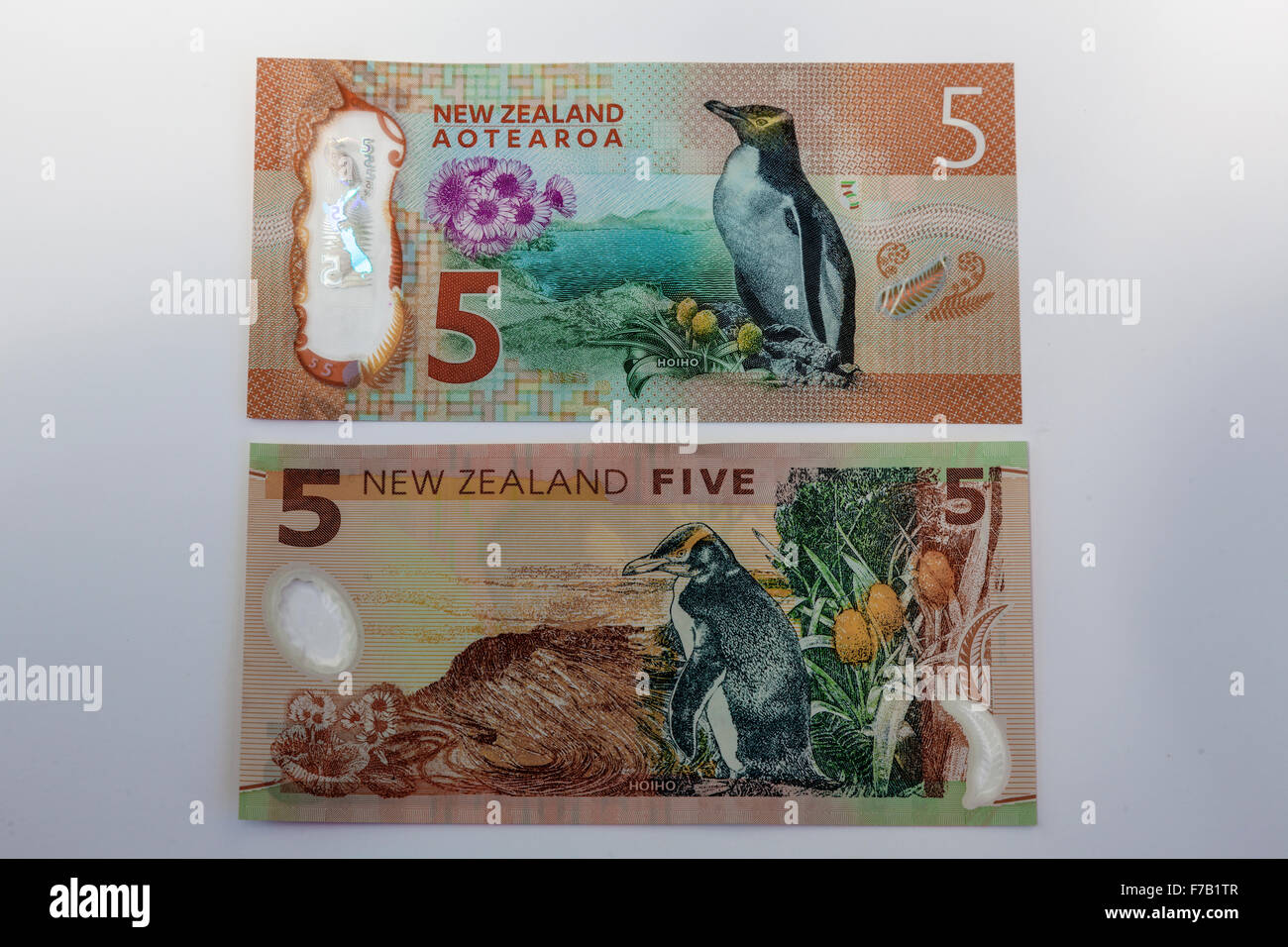 New updated and old   five kiwi dollar $5  New Zealand  bank notes,NZD  reverse side - Stock Image