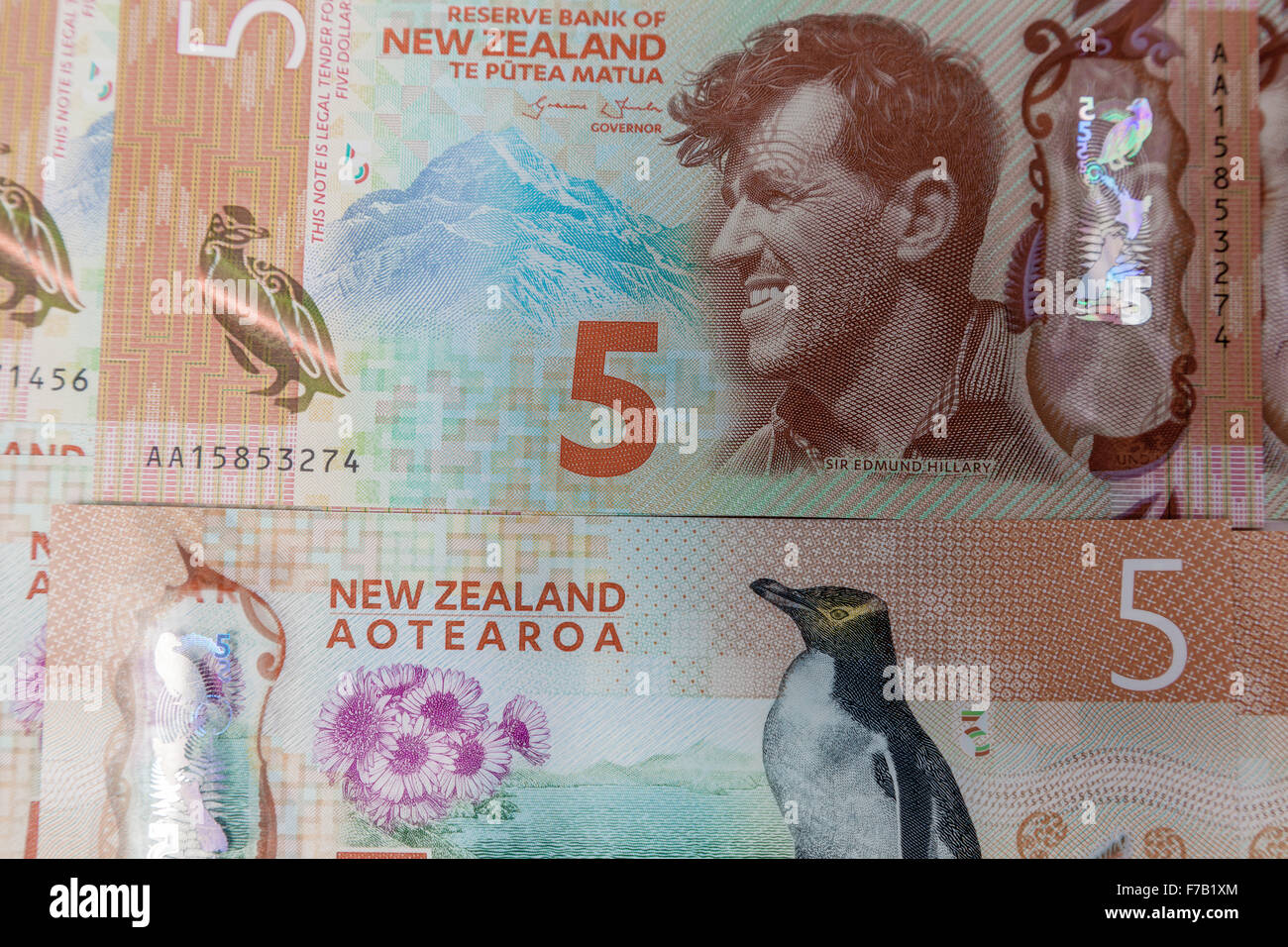 New updated  $5 five kiwi dollar New Zealand  plastic polymer bank notes NZD, both sides - Stock Image
