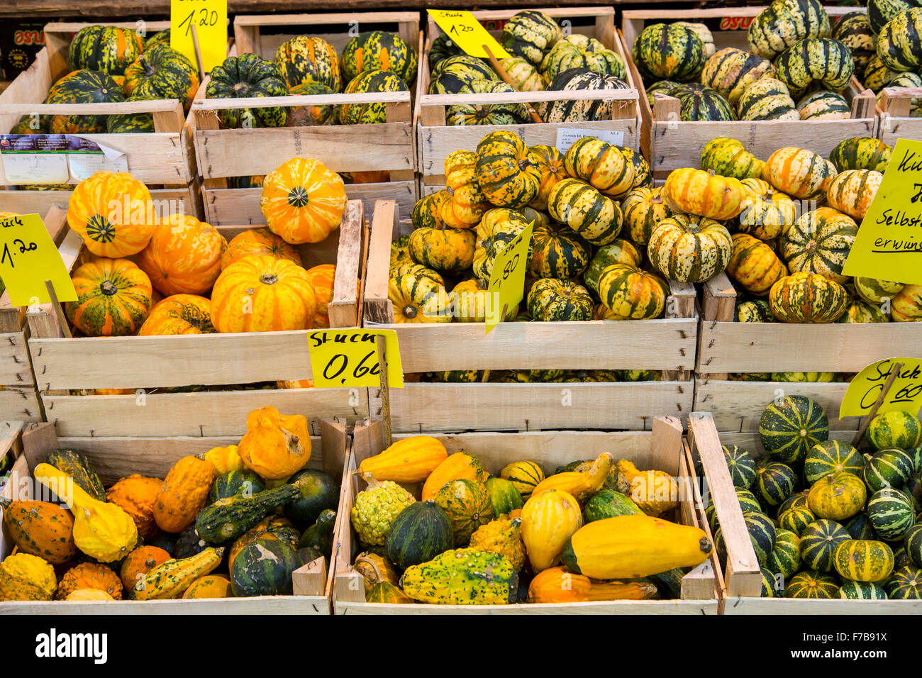 Different kinds of pumpkins, on a market stand - Stock Image
