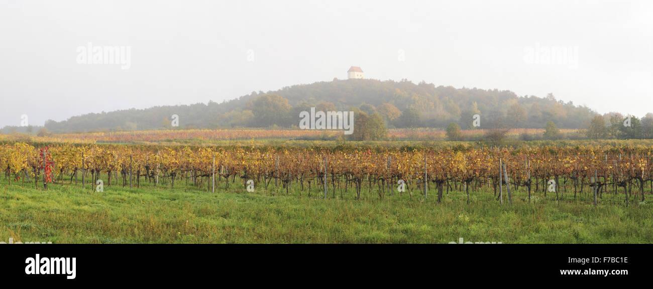 Vine yard, Austria, Burgenland, Northern Burgenland - Stock Image