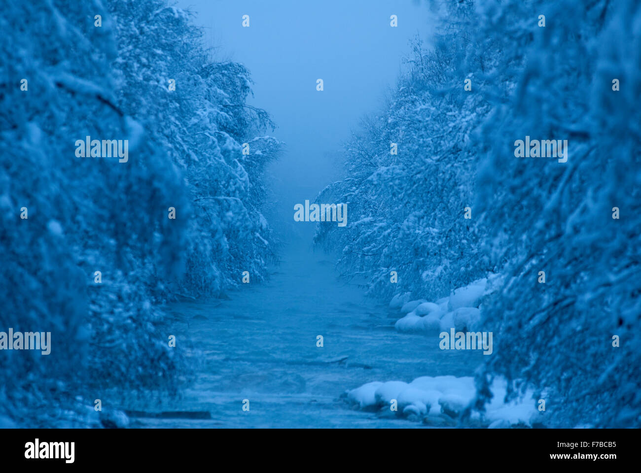 Misty early morning scene from bridge crossing the L'arve river with trees and river bank covered in fresh snowfall. - Stock Image