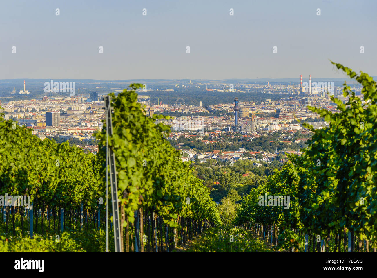 Wien, view from moutain Am Himmel, Vienna, Austria, Central Europe, 19. district, Am Himmel - Stock Image