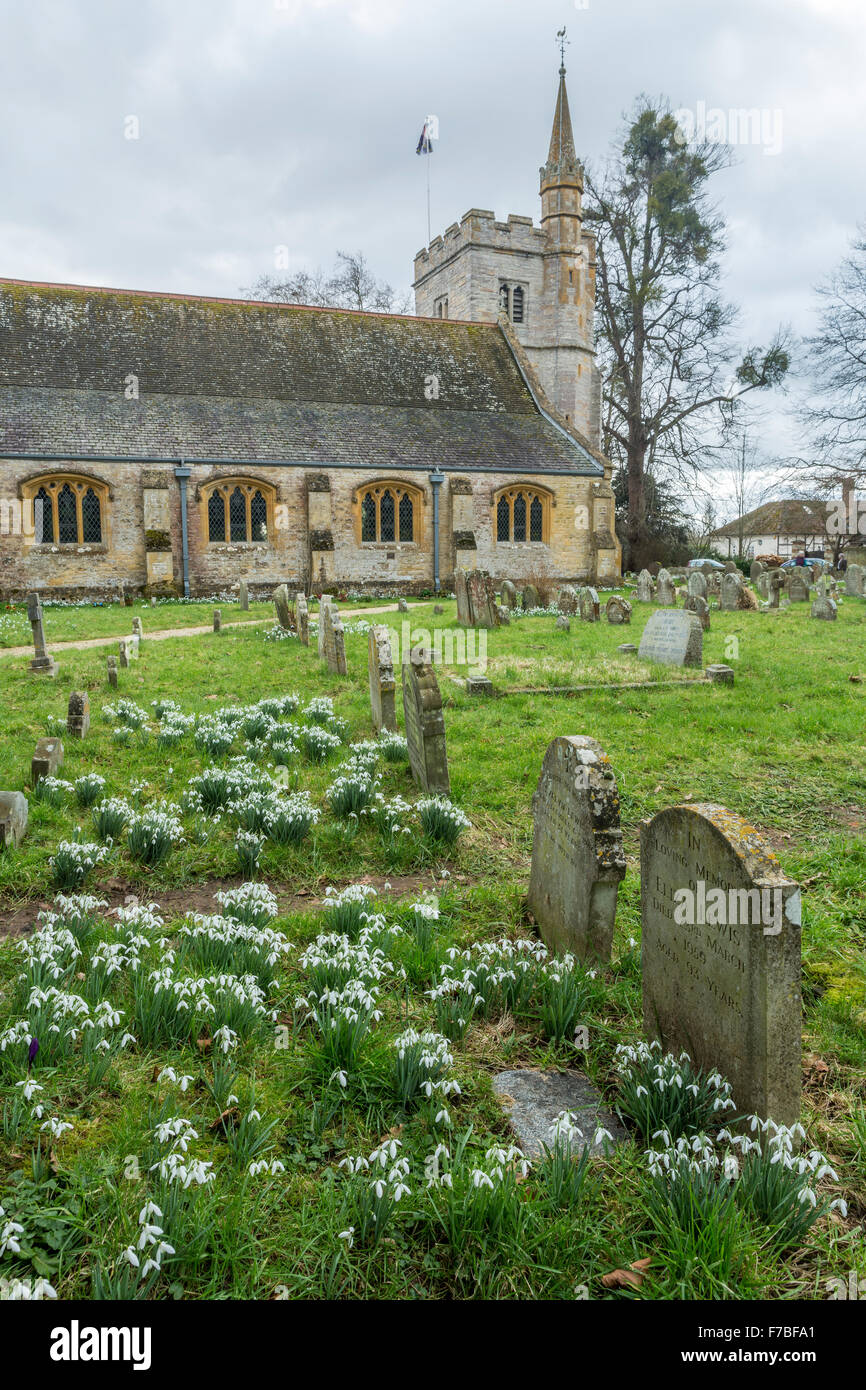 Snowdrops, Galanthus, in the churchyard at Birlingham, Worcestershire, England Stock Photo