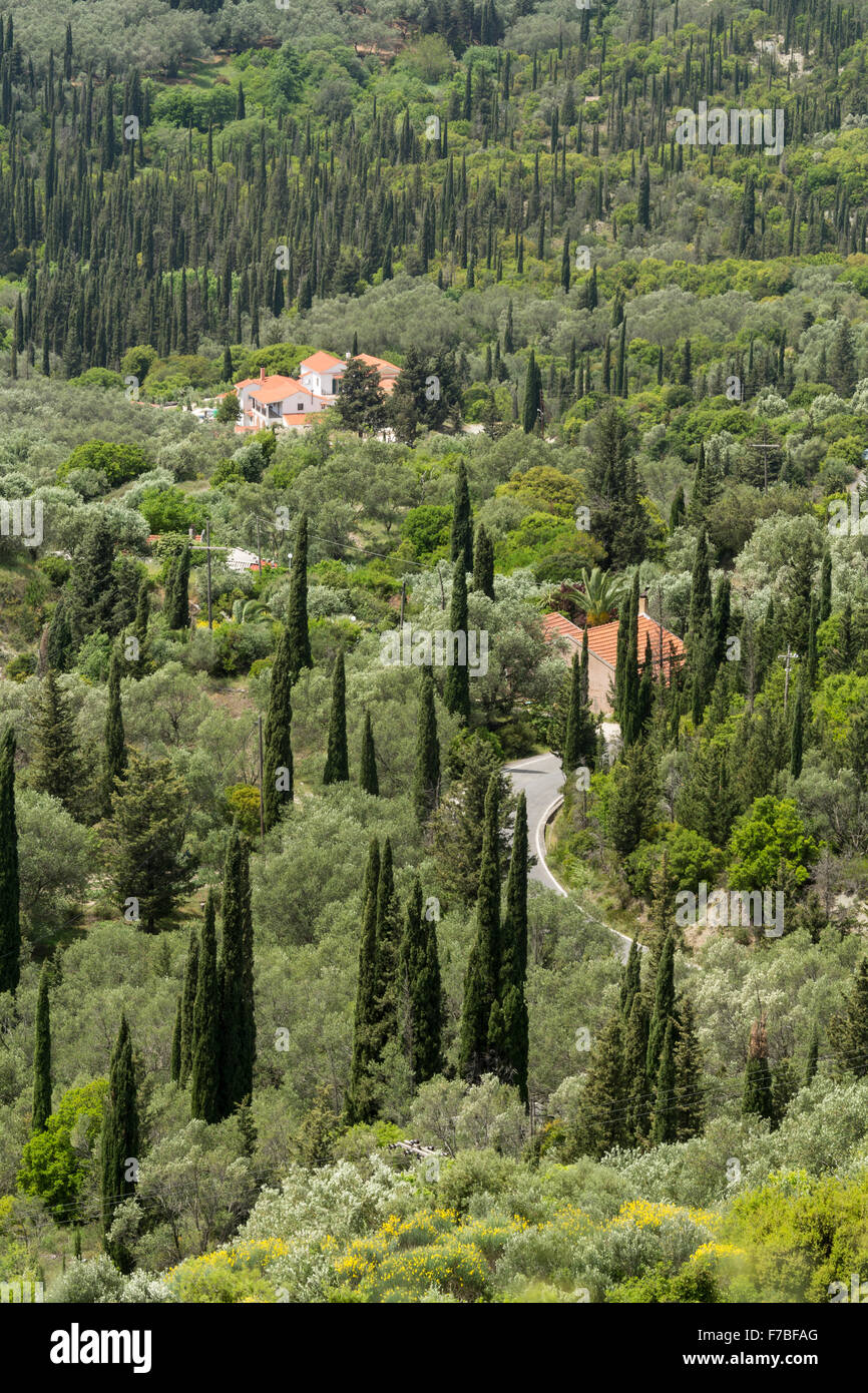 Greek Villas stand amounst the cypress and Olive trees in Corfu. Stock Photo