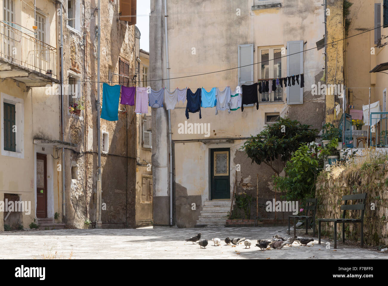 Pigeons feeding in a back street in Corfu Town. Corfu Stock Photo