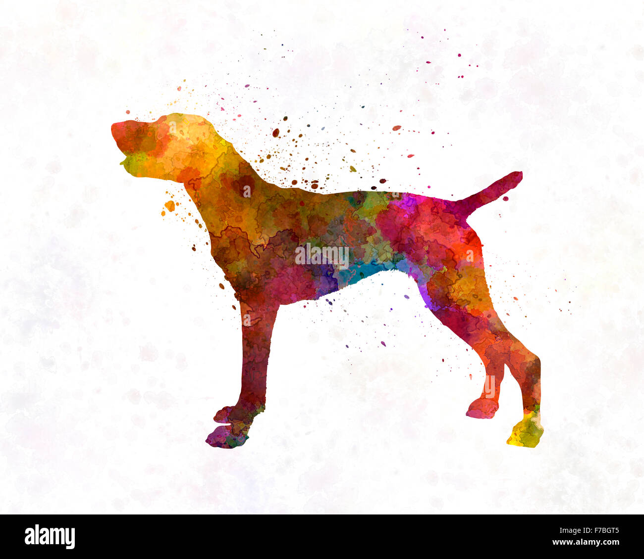 German Shorthaired Pointer in watercolor - Stock Image
