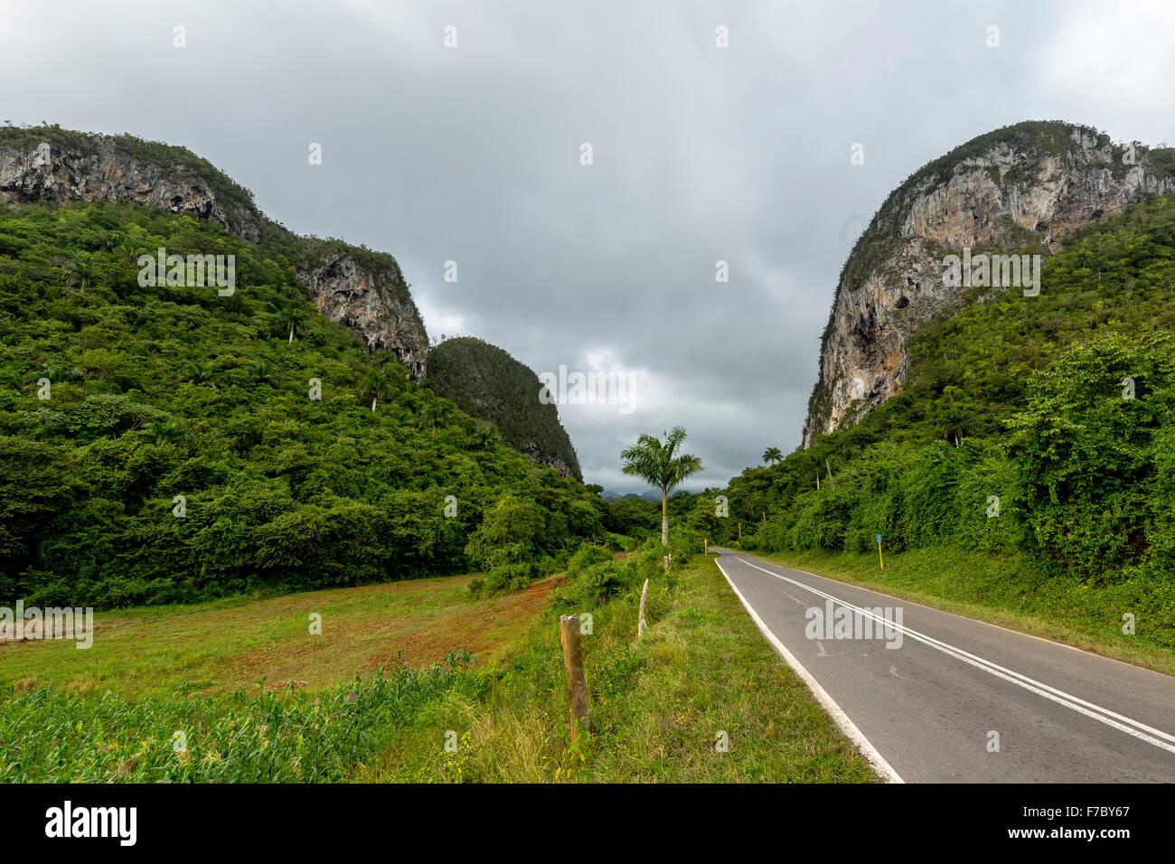 Country road with median strip in Vinales, karst mountain in the Vinales Valley, Vinales, Cuba, Pinar del Rio, Cuba, Stock Photo