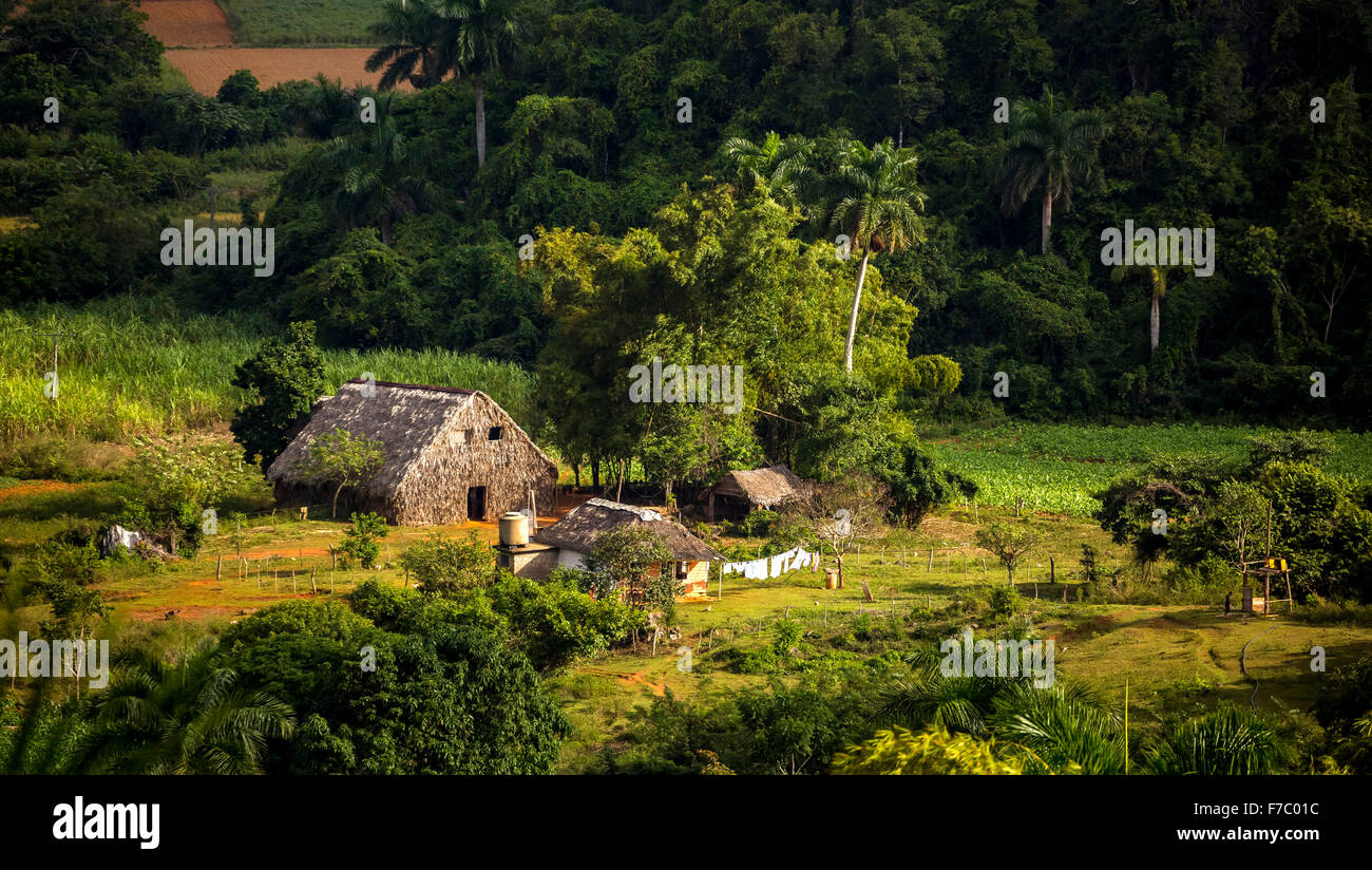 Farmhouse, farmer's cottage, barn for drying tobacco leaves, tobacco fields and the mountains of Mogotes, Viñales - Stock Image