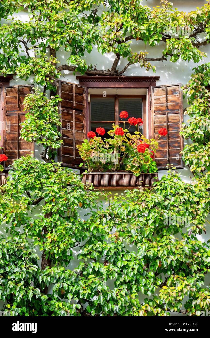 Window with red flowers, Hallstatt, Salzkammergut, Austria - Stock Image