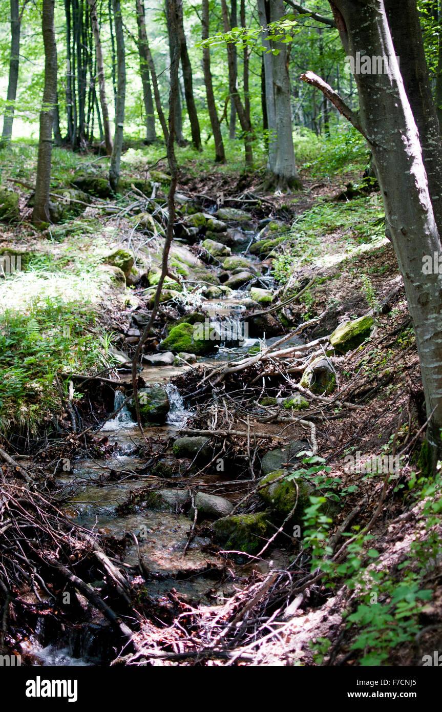 Green Forest in the Vitosha Mountains, Sofia, Bulgaria - Stock Image