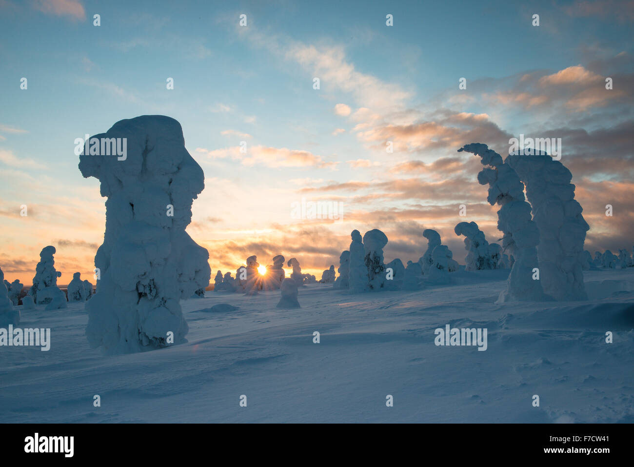 Snow-covered spruces, fjell in winter, Riisitunturi National Park, Posio, Lapland, Finland Stock Photo