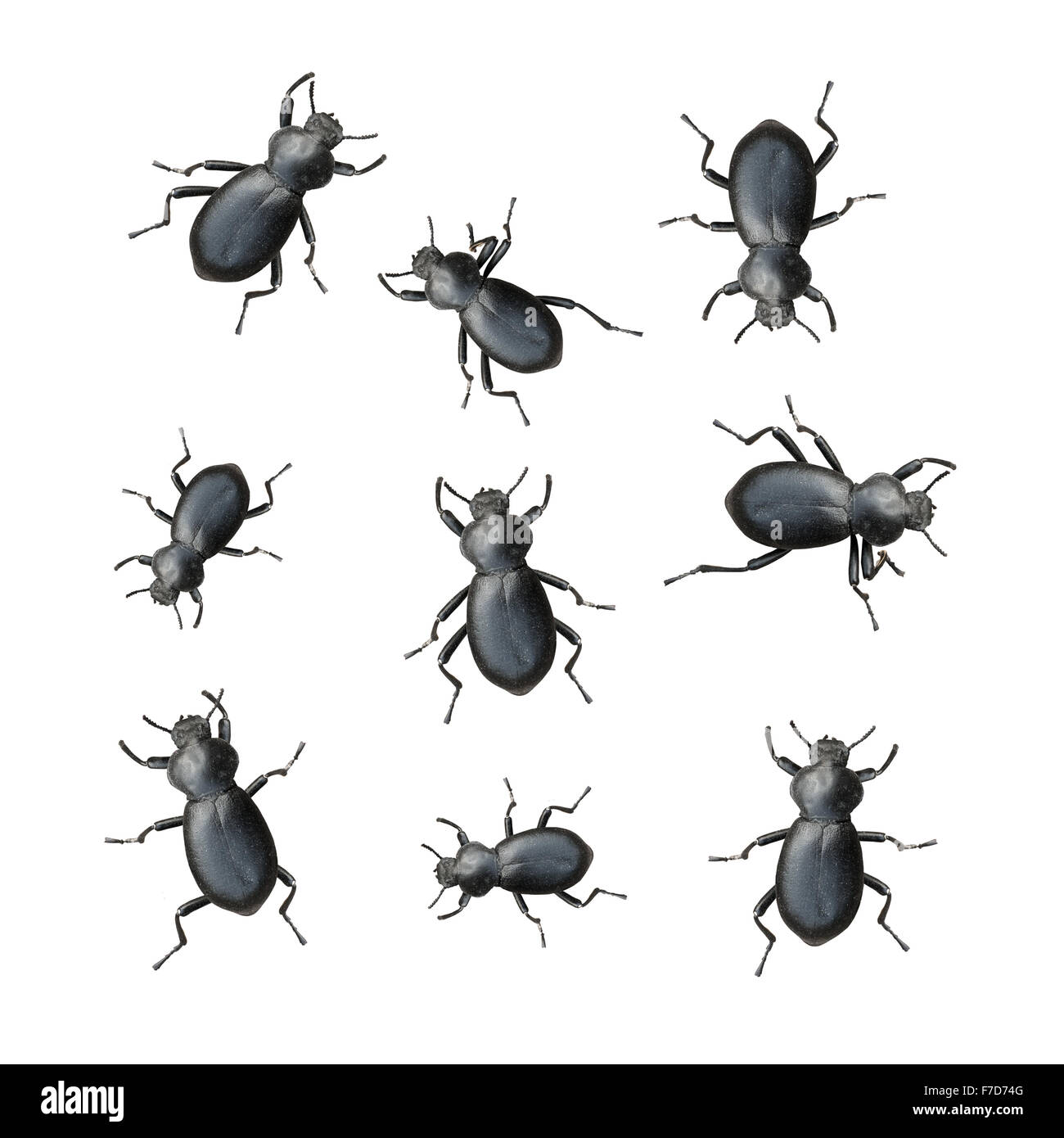 Creepy Crawly Black Beetles On A White Background - Stock Image