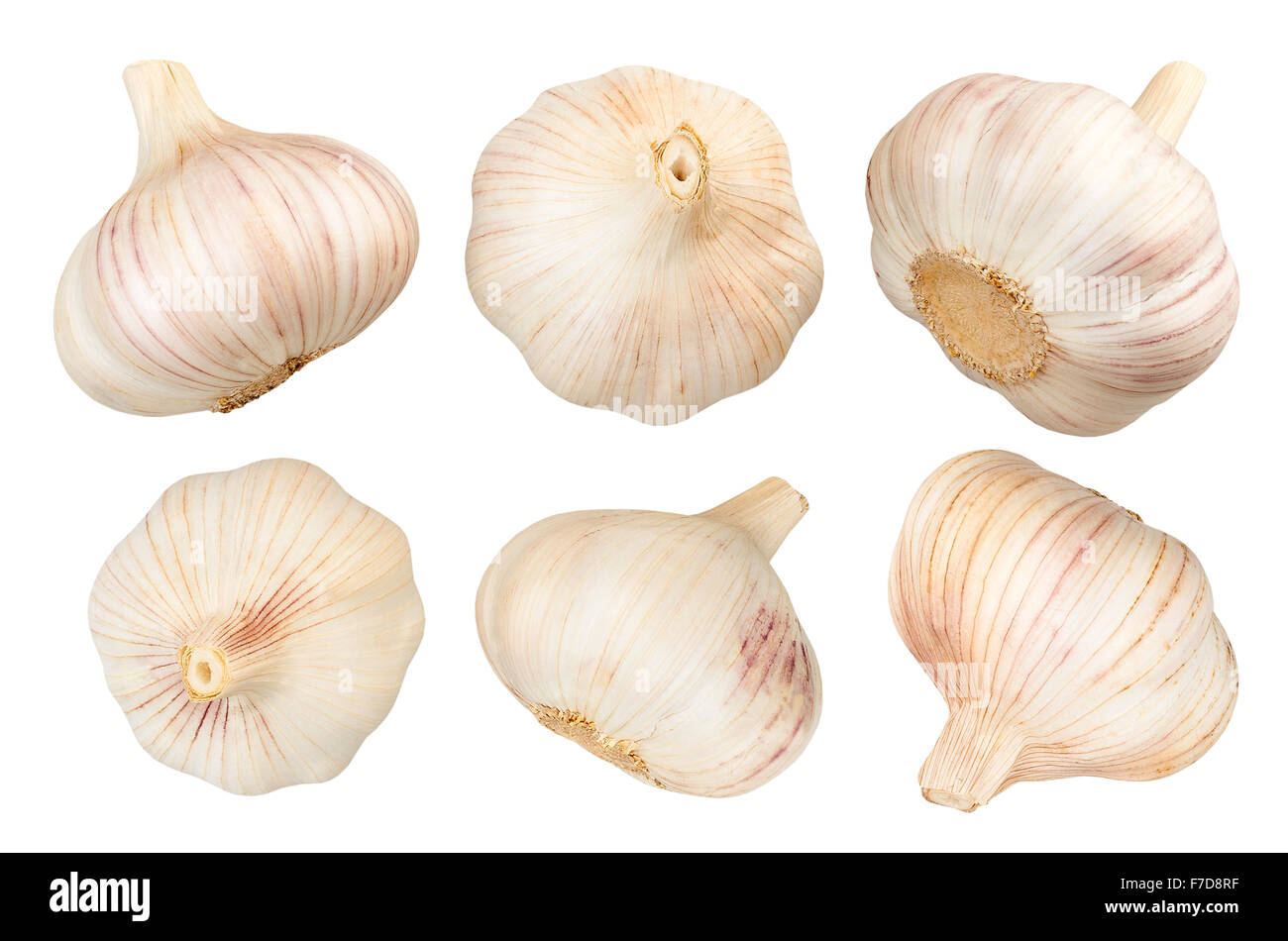 garlic isolated - Stock Image