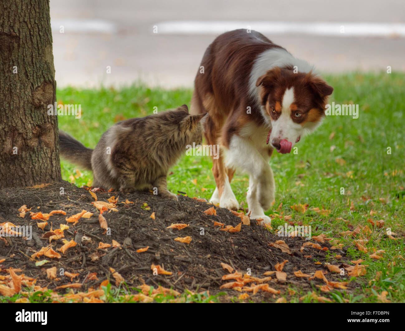 A dog and cat face off against each other - Stock Image
