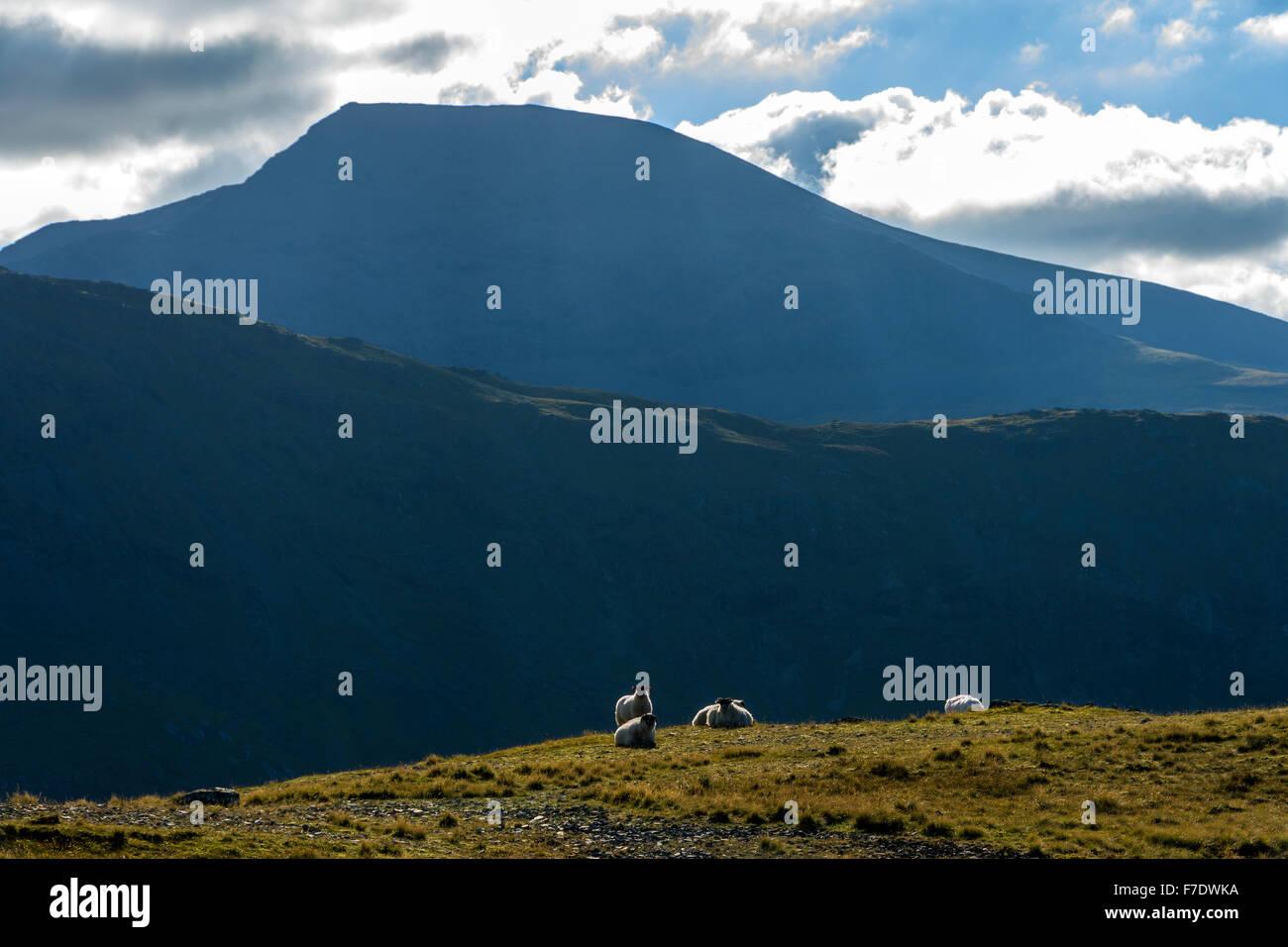 Ben More from the summit ridge of Beinn nan Gabhar, Isle of Mull, Argyll and Bute, Scotland, UK - Stock Image