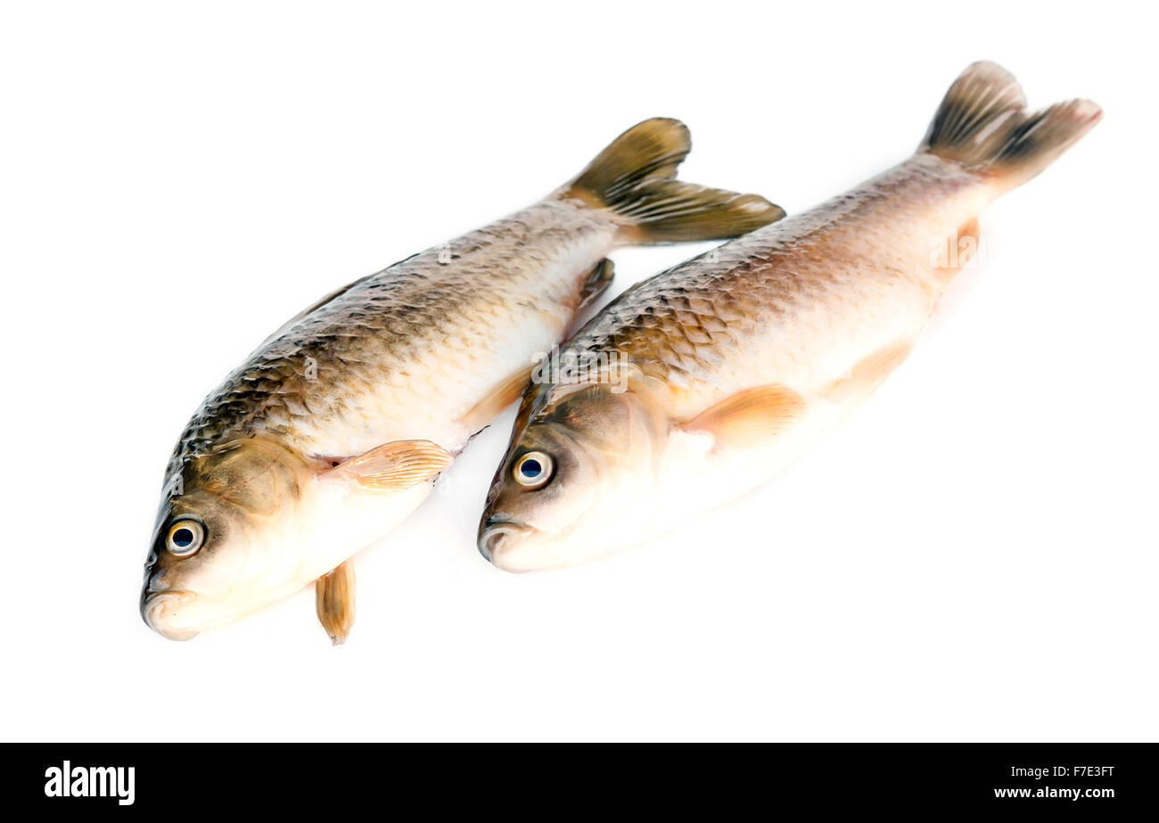 Freshly fish Crucian carp (Carassius auratus gibelio) isolated on white Stock Photo