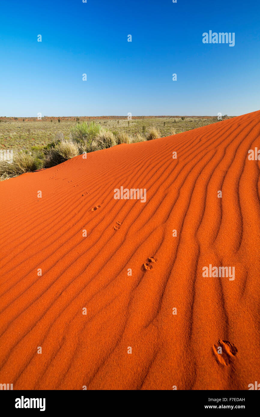 Kangaroo tracks and ripples in a red sand dune on a clear day. Photographed in the Northern Territory in Australia. - Stock Image