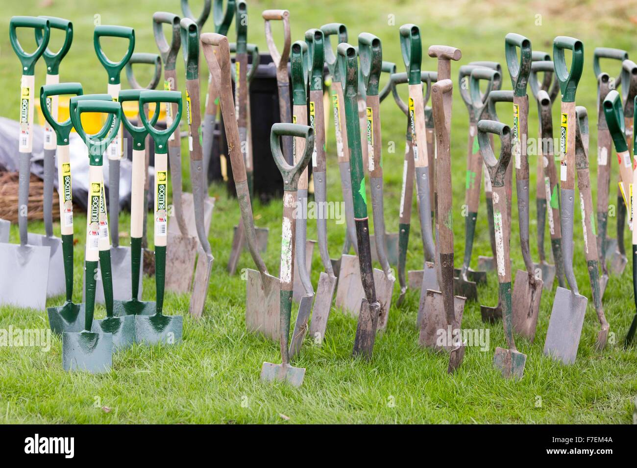 gardening spades in the ground - Stock Image