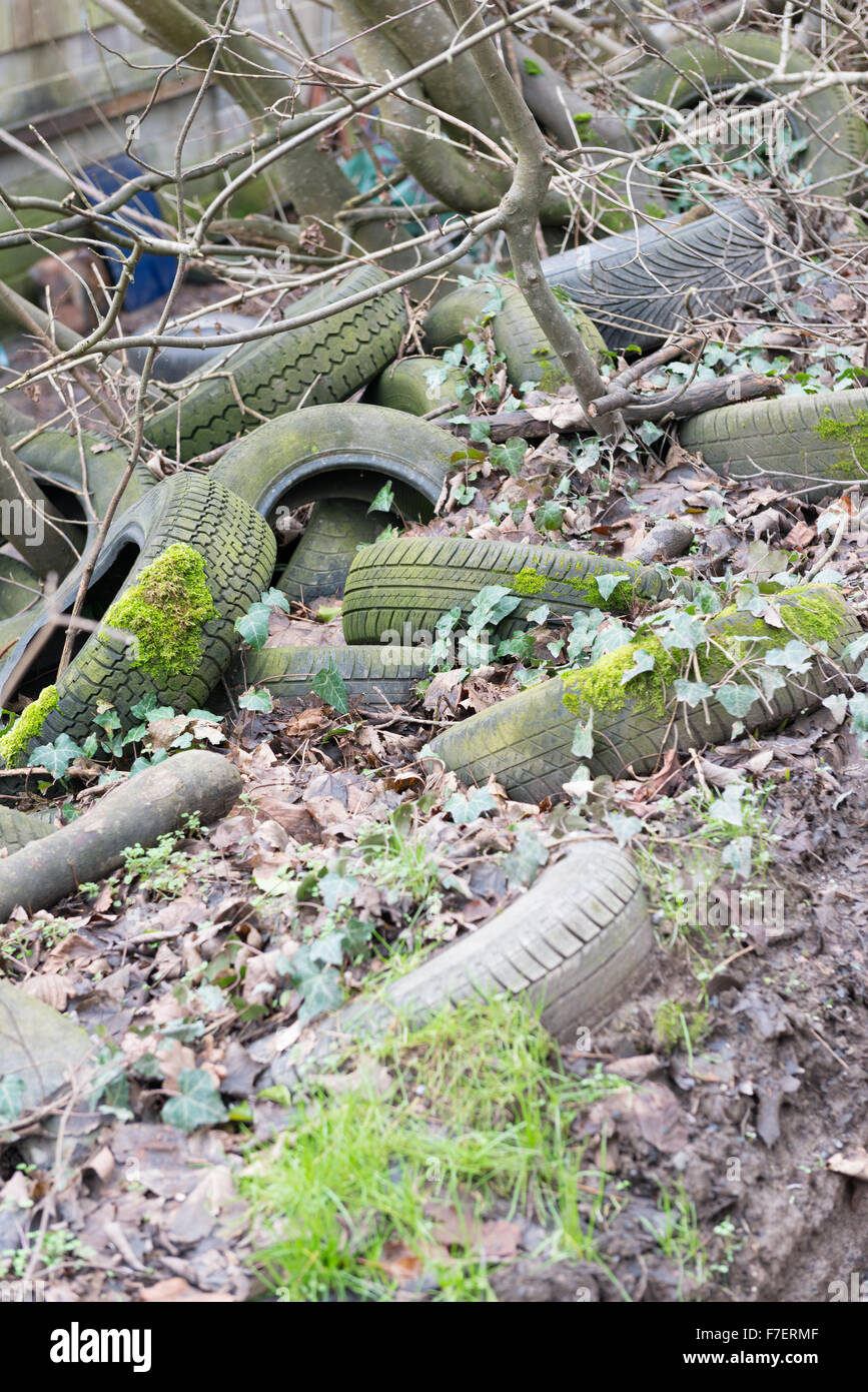 Moss and algae-covered car tyres dumped amongst ivy and fallen leaves in hedge on a country lane - Stock Image