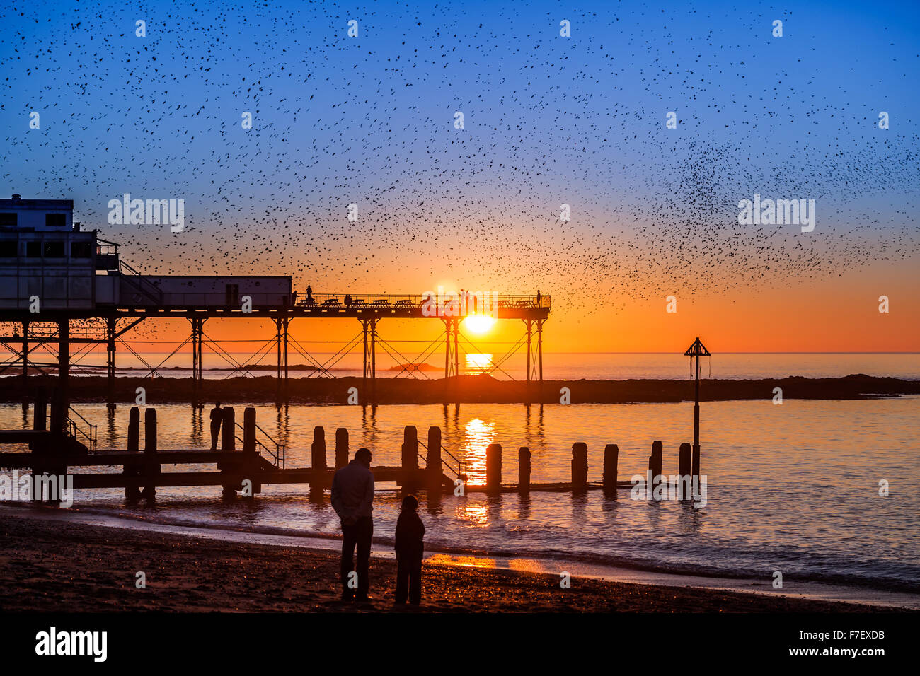starling murmuration over Aberystwyth pier at sunset - Stock Image