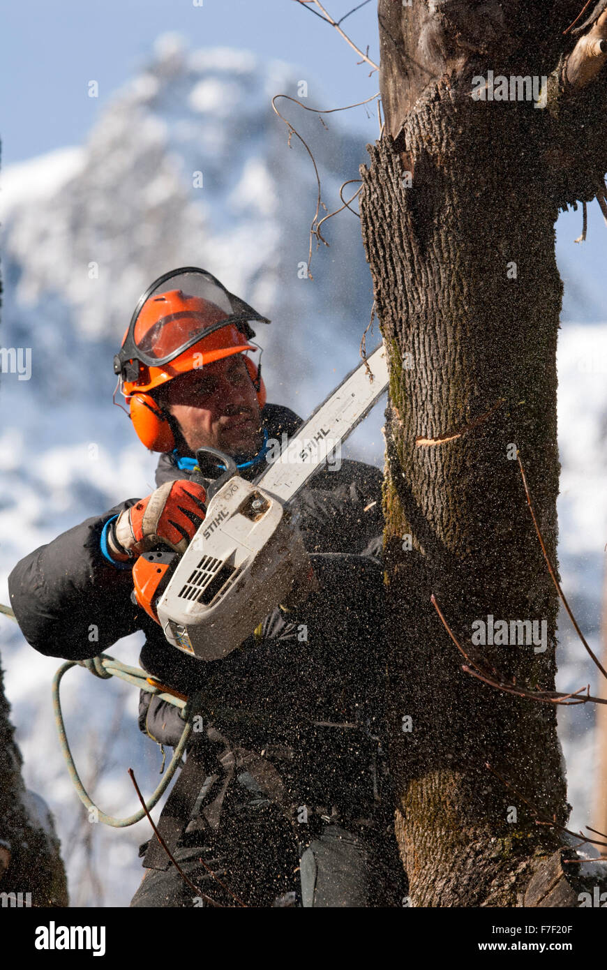 Tree surgeon with small chainsaw cutting through tree trunk with snow covered mountain in the background - Stock Image