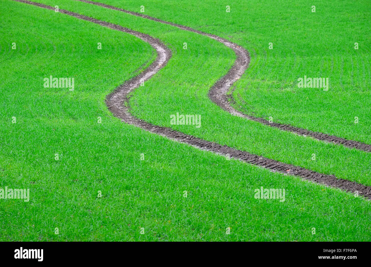 tractor tyre tracks on green winter crop field - Stock Image