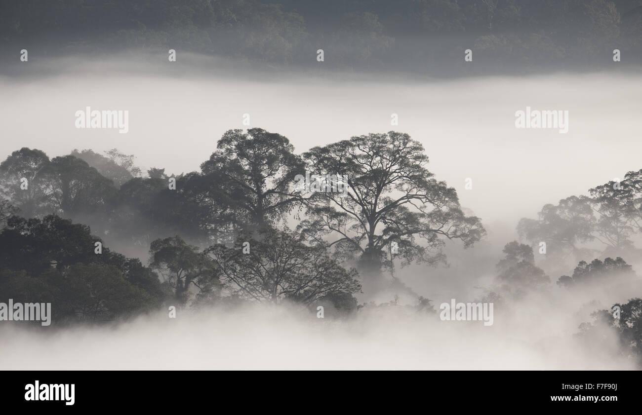 Mist rising at dawn over Danum Valley, Sabah, Malaysia Stock Photo